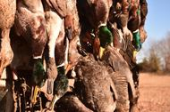 stuttgart guided duck hunts